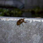 蝉の幼虫を見つけたので撮影した