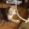 猫と遊ぶ(あそばれる)
