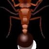 アカカミアリに効くオススメ殺虫剤・防虫剤